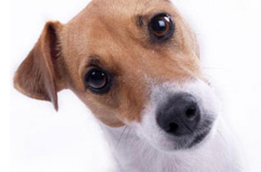 Petsmart - Oxon Hill MDPetsmart - Oxon Hill MD