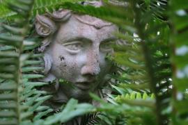 Ginkgo Gardens - Capitol Hill DC